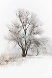 Деревья зимы снежные Стоковая Фотография RF