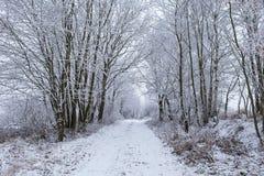 Деревья зимы с замороженным путем стоковые фотографии rf