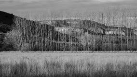 Деревья зимы B&W и красные скалы стоковое изображение