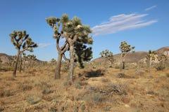 Деревья Иешуа в национальном парке дерева Иешуа california Стоковое Фото