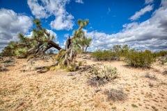 Деревья Иешуа и голубые небеса Аризоны с облаками стоковые изображения