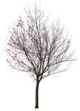 Деревья изолированные на белой предпосылке Стоковое фото RF