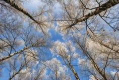 Деревья иллюстрация над вектором вала неба разветвляет hoarfrost Стоковое фото RF