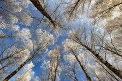 Деревья иллюстрация над вектором вала неба разветвляет hoarfrost Стоковое Изображение