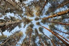 Деревья иллюстрация над вектором вала неба разветвляет hoarfrost Стоковая Фотография