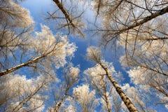 Деревья иллюстрация над вектором вала неба разветвляет hoarfrost Стоковые Фотографии RF