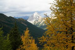 Деревья лиственницы для цвета осени Стоковые Фотографии RF