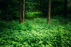 Деревья лиственного леса лета зеленые с крапивами стоковое изображение