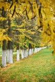 Деревья и ветви осени в парке аранжировали в ряд, зеленая трава и листья желтого цвета Стоковая Фотография RF