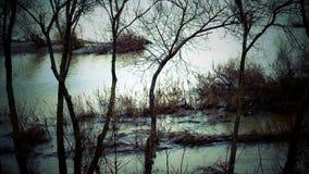 Деревья и взгляд озера мистический сток-видео