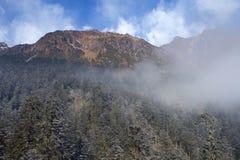 Деревья и горы снега Стоковое Изображение