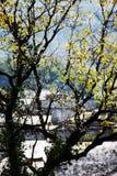 Деревья и деревни в осени стоковые фото