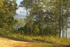 Деревья и леса в утре Стоковые Изображения RF