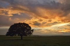 Деревья и заход солнца на поле стоковые фотографии rf