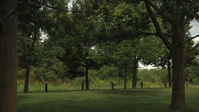 Деревья и зеленое поле в парке акции видеоматериалы