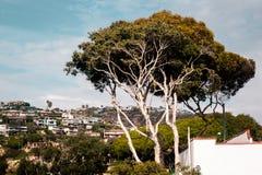 Деревья и здания в Laguna приставают к берегу, Калифорния стоковая фотография