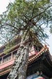 Деревья и здания Стоковая Фотография RF
