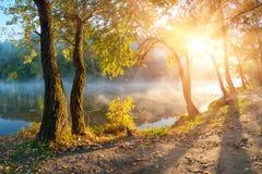 Деревья и листво осени Стоковое Фото