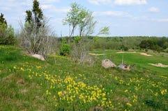 Деревья и камни в зеленой траве Стоковая Фотография RF