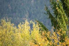 Деревья и кустарники в красивых осенних цветах стоковые изображения rf
