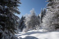 Деревья и лес в зимнем дне стоковые изображения