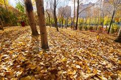 2 деревья и листь в парке Стоковые Фотографии RF