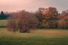 Деревья и луга в падении стоковая фотография