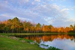 Деревья и малый пруд формируют совершенное отражение на заходе солнца Стоковое Изображение