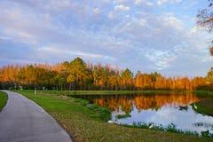Деревья и малый пруд формируют совершенное отражение на заходе солнца Стоковая Фотография RF