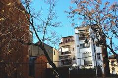 Деревья и небо Валенсия зданий голубое стоковые фотографии rf