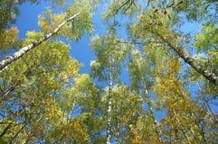 Деревья и небо Стоковые Фото