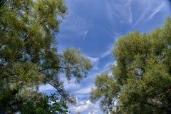 Деревья и небо Стоковая Фотография