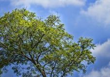 Деревья и небо Стоковое Изображение