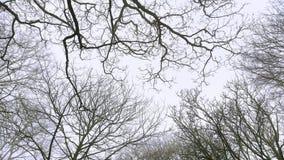 Деревья и небо Стоковое фото RF