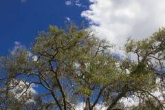 Деревья и небо Стоковые Фотографии RF