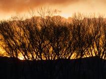 Деревья и облака горизонта на зоре стоковая фотография