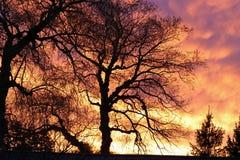 Деревья и облака Стоковое фото RF