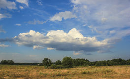 Деревья и облака Стоковые Изображения RF