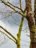 Деревья и озеро мха Стоковые Фотографии RF