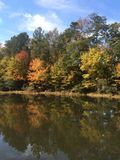 Деревья и озеро Стоковая Фотография RF