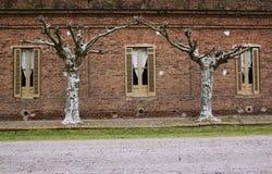 Деревья и 3 окна в историческом доме Стоковая Фотография RF