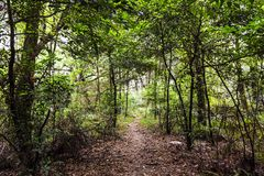 Деревья и дорога Стоковые Изображения RF