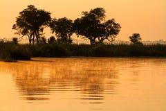 Деревья и отражение Стоковое Изображение RF