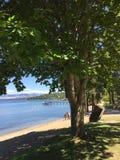 Деревья и песчаный пляж на озере с пристанью в предпосылке Стоковые Изображения