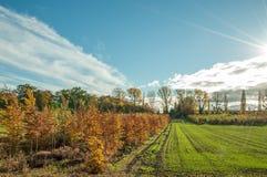 Деревья и поля осени в великобританской сельской местности Стоковая Фотография RF