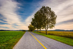 Деревья и поля вдоль дороги в сельском York County, Пенсильвании Стоковые Фотографии RF