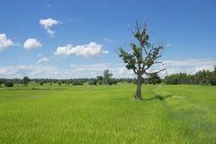 Деревья и поля Стоковая Фотография RF