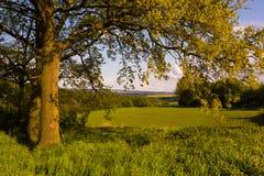 Деревья и поля Стоковые Изображения RF