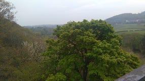 Деревья и поля Стоковое Изображение RF