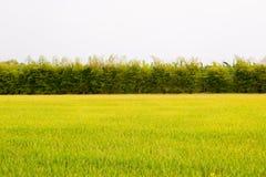 Деревья и поля Стоковое Фото